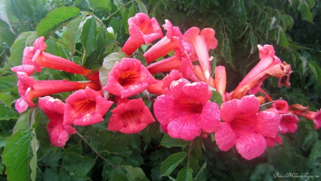 Цветы. Севастопольская трасса