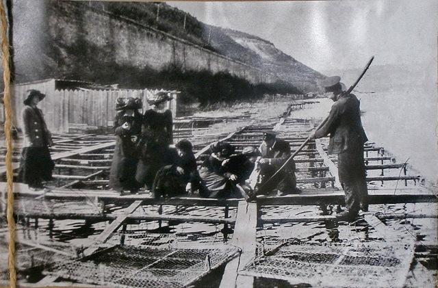 Ферма устриц в Крыму
